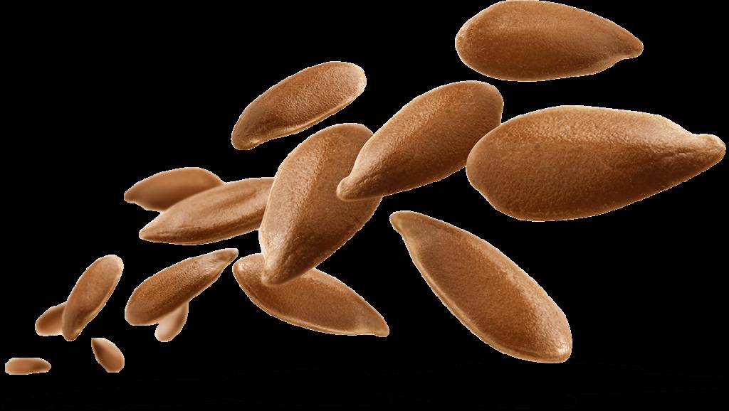 Seeds warmer